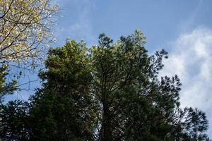 paisaje natural con vistas a los árboles otoñales contra el cielo foto