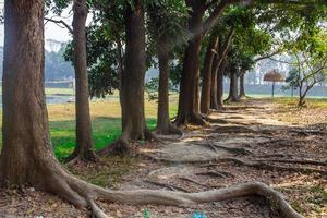 árbol en una fila en el jardín foto