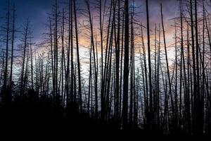 Dramatic scene of twilight sky with silhouetted dead trees. photo