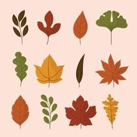 Autumn Leaves Icon Collection vector