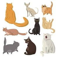A selection of nine realistic cats on a white background - Vector