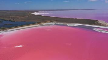 Aerial view of pink lake with salt shore photo
