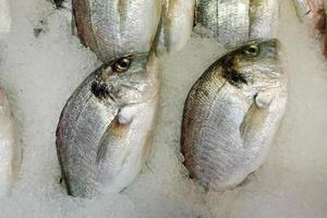 Fish Food in a Fish Market Stand photo