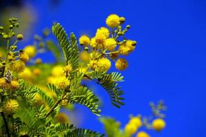 Beautiful Plant Yellow Flowers in Nature photo