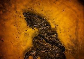 dinosaurio prehistórico esqueleto fósil foto