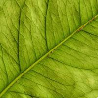 Natural Plant Leaves Pattern photo