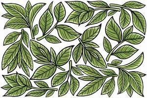 leaf nature in flat design style vector