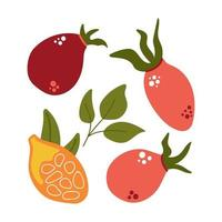 Hand drawn set of rose hip berries, rose berry with leaves. vector