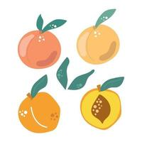 Set of peaches with leaves. Modern fruit illustration. vector