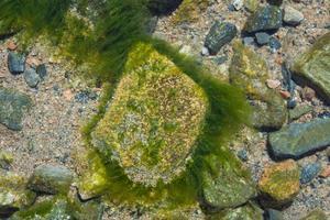 piedra y agua florecen 3 foto