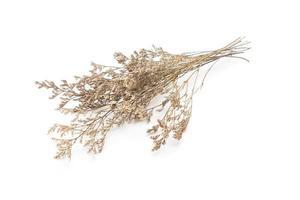 Dried Caspia Flowers photo