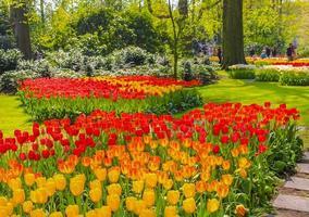 Many colorful tulips daffodils Keukenhof Lisse Holland Netherlands. photo