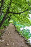 sendero paisajístico en el lago parque nacional de los lagos de plitvice croacia. foto