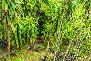 Monsoon rain Tar Nim Waterfall Secret Magic Garden Koh Samui. photo