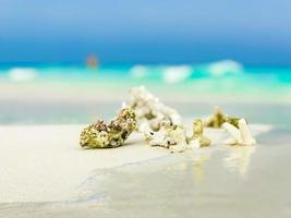 corales de arena de playa blanca y conchas en el atolón rasdhoo maldivas. foto