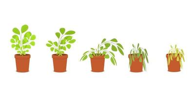 Phases of plant withering. Blossom and wilt flowers in the pots vector