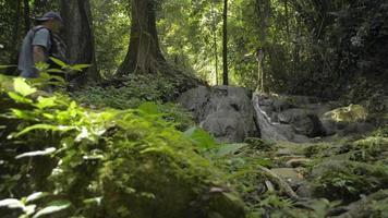 famille asiatique marchant ensemble dans la forêt tropicale pendant l'été. video