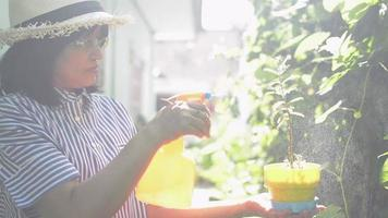 Woman wears straw hat spraying water on little potted plants at home. video