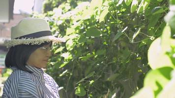 Happy woman wears straw hat caring and trimming green plants at home. video