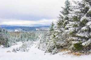 Winter forest landscape in the Brocken mountain, Harz, Germany photo