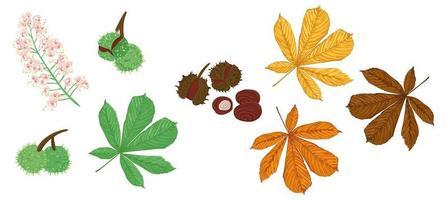 Set of chestnut tree elements vector