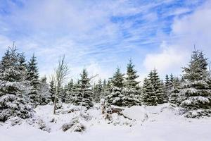 Snow covered trees in the Brocken mountain, Harz mountains, Germany photo