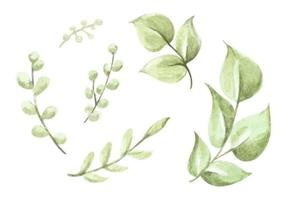 Green leaves elements collection. Watercolor floral illustration. vector