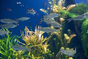 Fishes in aquarium photo
