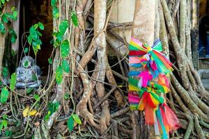 Roots of banyan trees fasten around the wall of old buddhist main hall photo