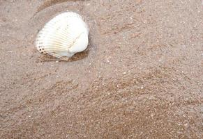 Resto de concha de mar en la playa de arena foto