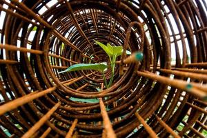 Leaf of morning glory insert in roll of rusty steel wire mesh photo
