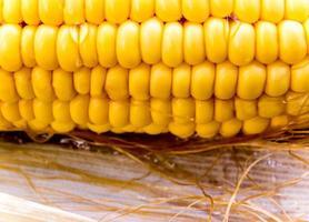 Texture of raw corn cob sweet maize photo