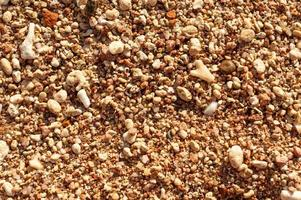 Sea shells on sand. Summer beach background. Top view photo