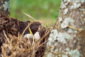 Nest forest bird with egg inside on a tree. photo