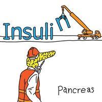 metaphor function of human pancreas vector