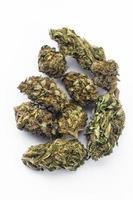 Legal Marijuana flowers on simple background photo