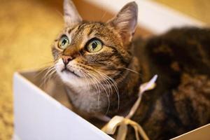 lindo gato descansa dentro de una caja blanca foto