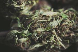 Legal Marijuana flowers photo