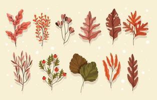Diverse Autumn Leaves vector