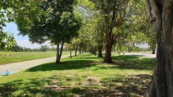 Tree pubic park photo