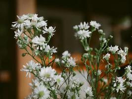 hermoso ramo de pétalos de flores de manzanilla foto