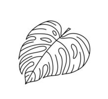 Single monoline vector drawing exotic tropical leaf monstera plant
