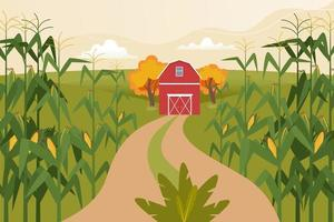 Autumn landscape with corn fields, farm home and field road. vector