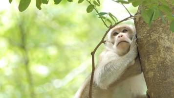 Monkey sitting on tree in mixed deciduous forest video