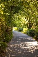 árboles estacionales y carreteras naturaleza verde en el parque foto