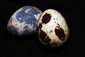 Animal Small Bird Egg Food photo