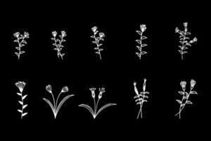 Hand drawn plants vector