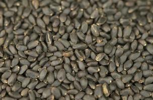 semillas de albahaca secas foto