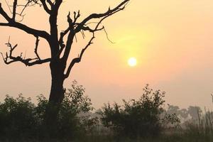 Hermosa vista del amanecer con árboles silueta de Tamil Nadu en India foto