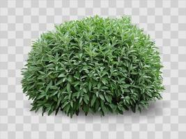 arbusto realista decorativo verde en el macizo de flores vector